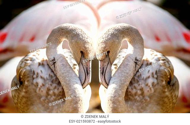 Two flamingos like heart
