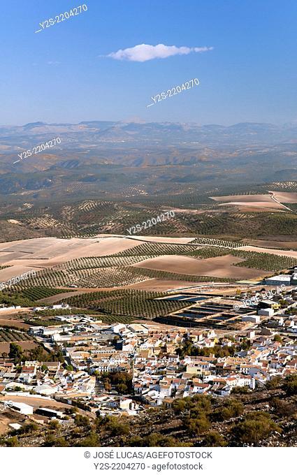 Landscape of olive grove, Alameda, Malaga-province, Region of Andalusia, Spain, Europe