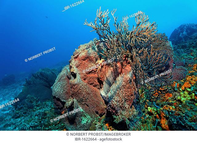 Reef drop off, overgrown, various colourful sponges, coral, Little Tobago, Speyside, Trinidad and Tobago, Lesser Antilles, Caribbean Sea