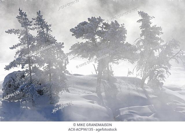 Trees in fog on the Wabigoon River Vermillion Bay Ontario Canada