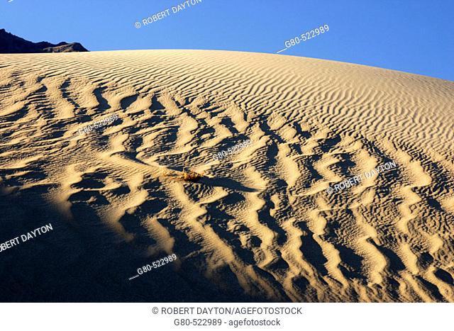 Mesquite Sand Dunes, Death Valley NP. California. USA