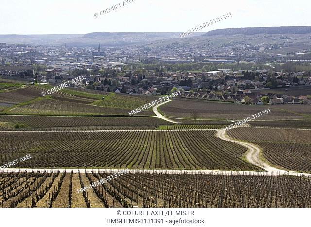France, Marne, Hautvillers, winter wineyards close to Epernay