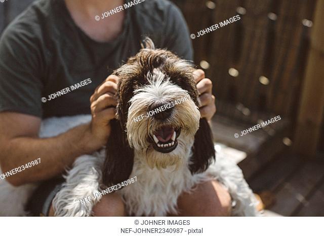 Dog looking at camera