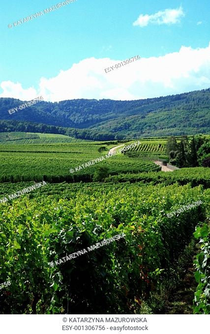 Vineyrad and Vosges - France, Alsace