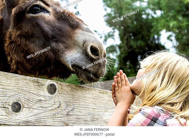 Greece, Corfu, girl watching donkey