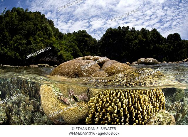 Reef Top at Low Tide, Misool, West Papua, Indonesia
