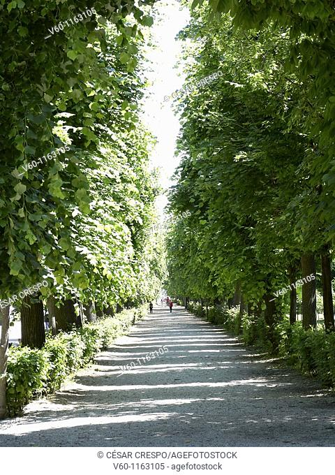 -Avenue of Trees- Wien (Austria)