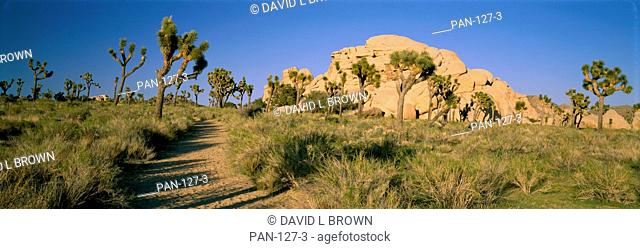 Foot Path, Joshua Tree National Park, California, USA