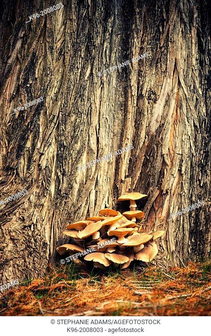 mushrooms at Fairmount Park in CA