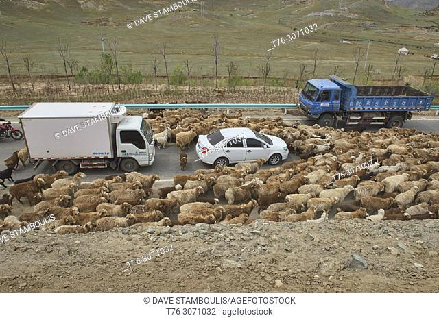 Kazakh nomads rounding up their sheep, Keketuohai, Xinjiang, China