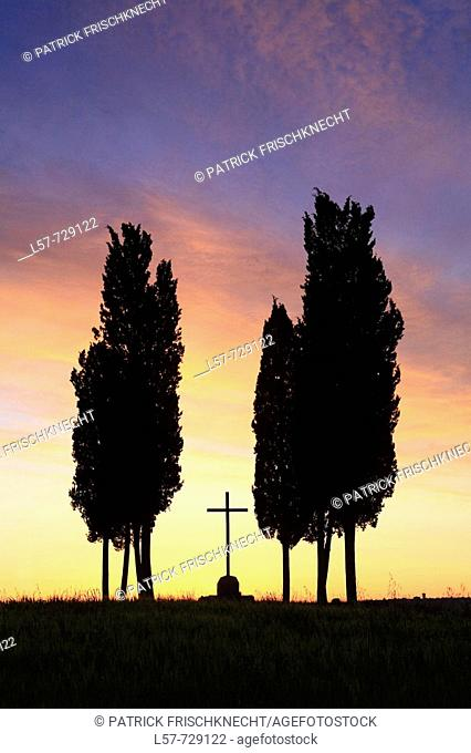 Cypress, Italian Cypress, Cupressus sempervirens, cross, silhouette, hill countryside, agricultural landscape, at sunrise, Tuscany, Italy