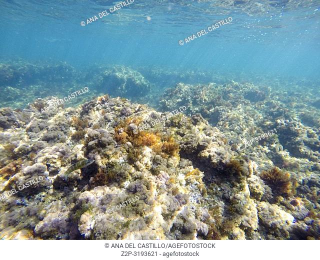 Underwater image in Las Rotas beach Natural park in Denia. Alicante, Spain