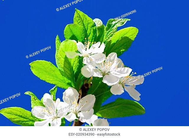 Flourish outdoors flower Stock Photos and Images | age fotostock