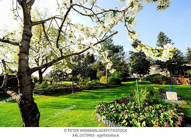 garden in spring time, Austria, Lower Austria, Southern Lower Austria, Eggendorf