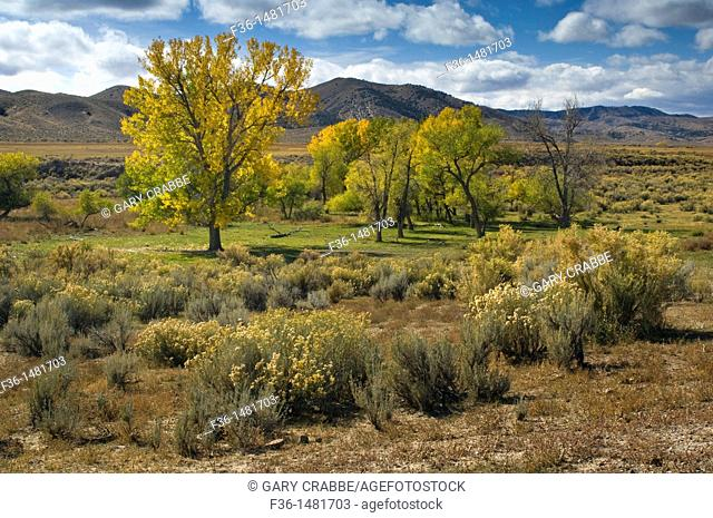 Fall colors on trees in range lands along Scenic State Route 120, Hot Springs County, Wyoming