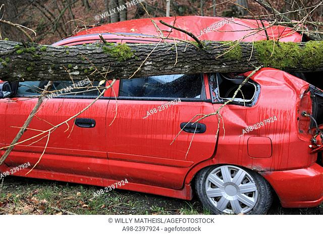 Tree crushed onto a parking car in Hurricane Niklas on March 31, 2015, Bavaria, Germany, Europe