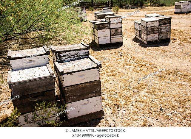 Boxes are the modern-day home for beehives, necessary to pollinate nearby crops