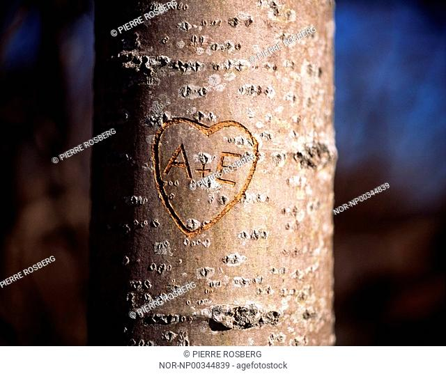 Close-up of a heart shape carved on a tree trunk
