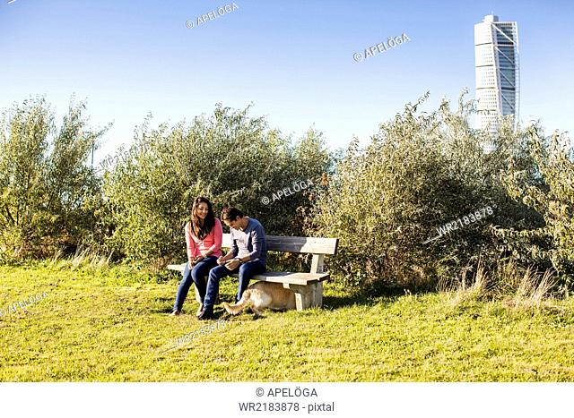 Couple playing with dog at park bench with Turning torso skyscraper in background