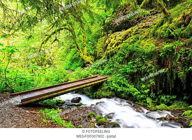 USA, Oregon, Multnomah County, Columbia River Gorge, Bridge over Wahkeena Creek