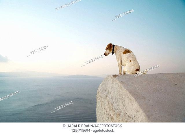 Dog on a roof, Oia, Santorin, Cyclade, Greece, Europe
