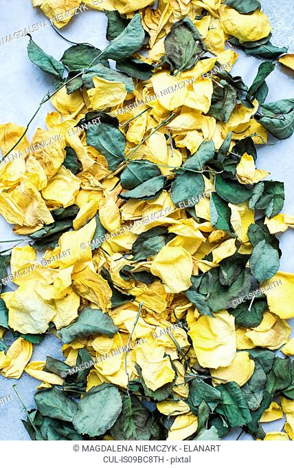Rose petals and dry leaves