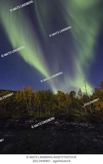 Northern Light, Aurora borealis over Björkliden in Kiruna County with river Kamajokk in foreground and yellow birch trees, Swedish Lapland, Sweden