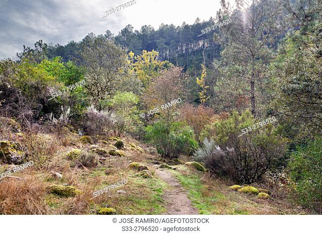 Fishermen's track in the Sierra de Gredos. Arenas de San Pedro. Avila. Castilla Leon. Spain. Europe