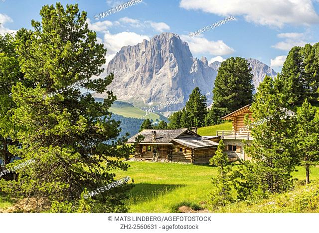 View over the Dolomites from Col Raiser, with a cabin, with spruce trees around, Selva, Val Gardena, Italy