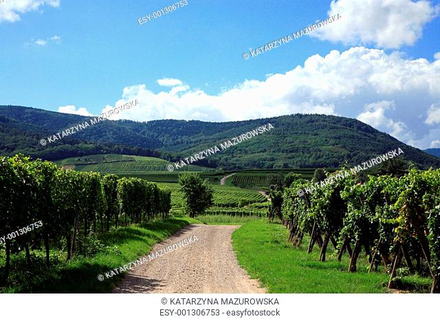 Vineyard and Vosges Mountain in France