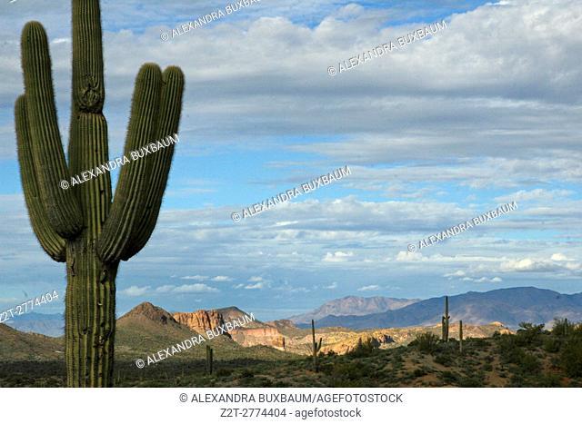 Lost Dutchman Park in Arizona, USA