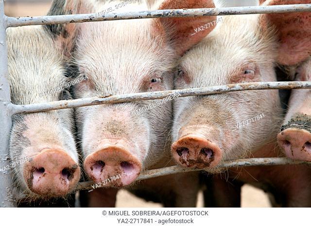 Pigs Pen Enclosure at Kalahari Farmhouse near Stampriet in Namibia