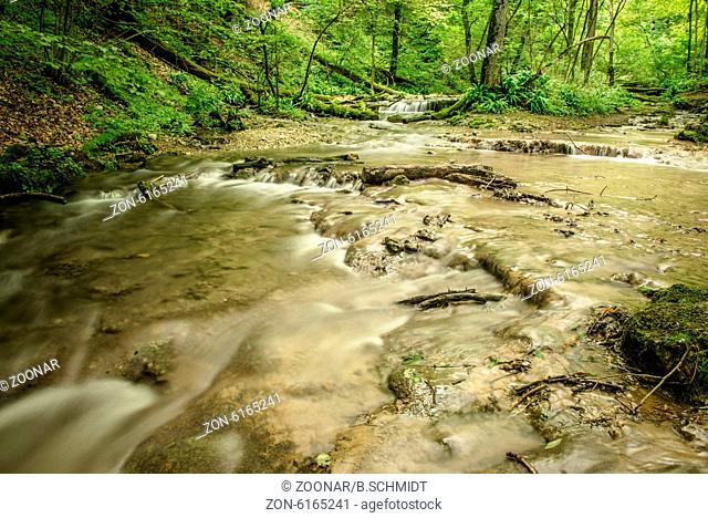 Stream in a green forest