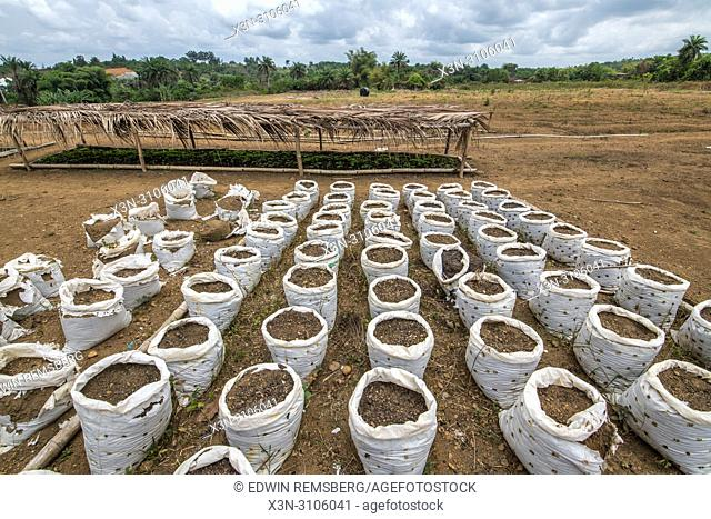 Rows of soil in bags are lined up on a farm in Ganta, Liberia