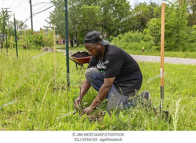 Detroit, Michigan - Thomas Roberes of Detroit Vineyards, plants Marquette wine grapes on formerly vacant land in the city's Morningside neighborhood