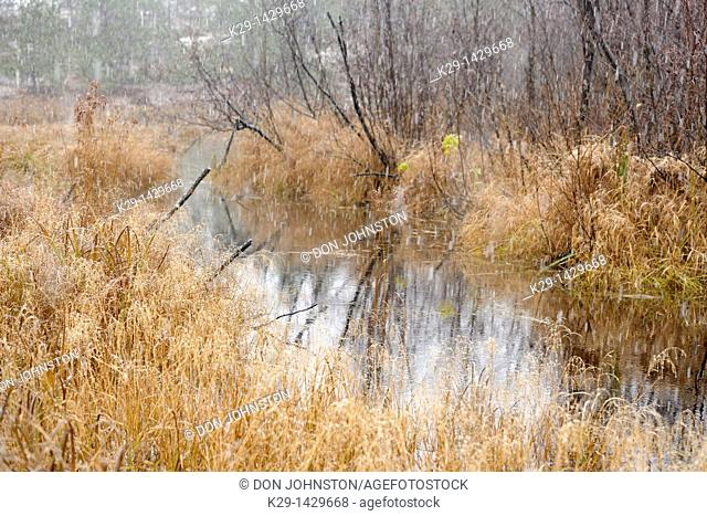 Beaver dam and pond in a snowstorm Greater Sudbury Ontario