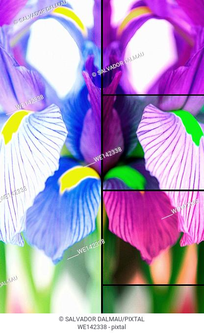 photography studio creative composition of flowers,decorative,location girona,catalonia,spain,europe,
