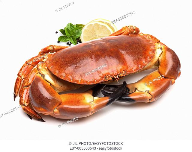 Cooked edible crab (Cancer pagurus)