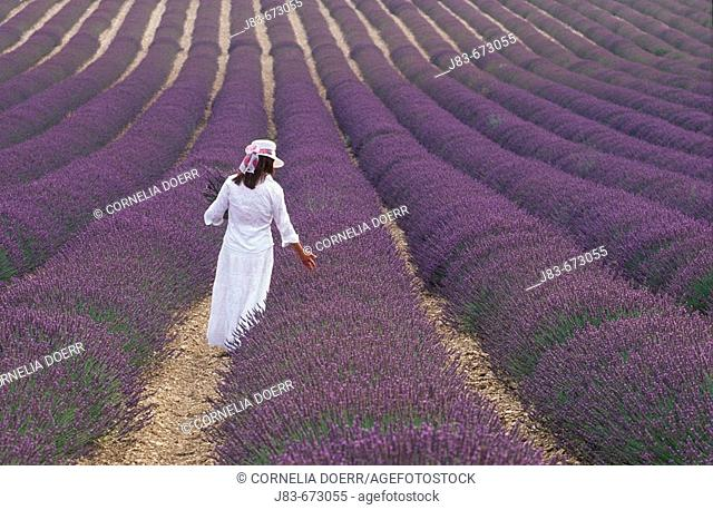 Girl in Lavender field, Plateau de Valensole, Provence, France