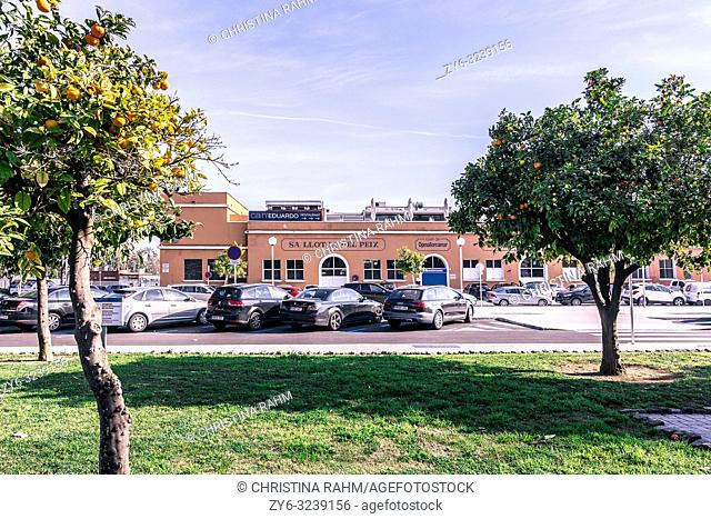 PALMA DE MALLORCA, SPAIN - FEBRUARY 9, 2019: Sa Llotja del Peix fish building and parked cars on February 9, 2019 in Palma de Mallorca, Spain