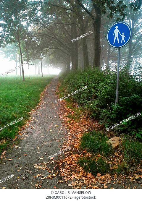 Path in wooded area on a foggy day. Photo taken in the Limburg province of the Netherlands
