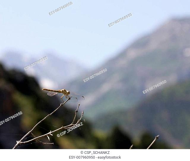 dragonfly on a background of mountains