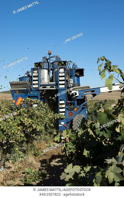 PASO ROBLES, CA, USA, OCTOBER 18, 2014: Despite the severe drought, a mechanical harvester collects a bounty of old Vine Zinfandel grapes from at the J&J...