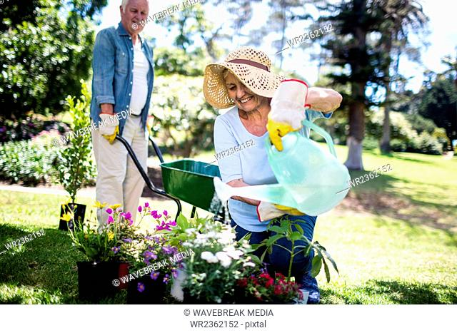 Senior woman watering flower plant in the park