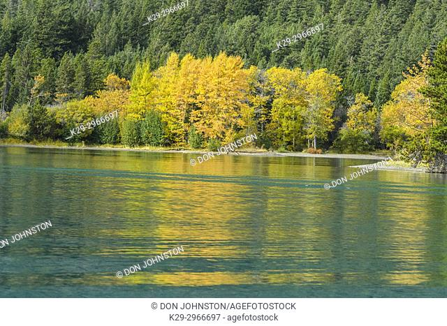 Autumn aspens reflected in Chilko Lake, Chilcotin Wilderness, British Columbia, Canada