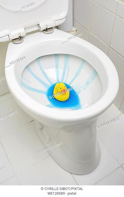 Rubber duck in clean toilet bowl