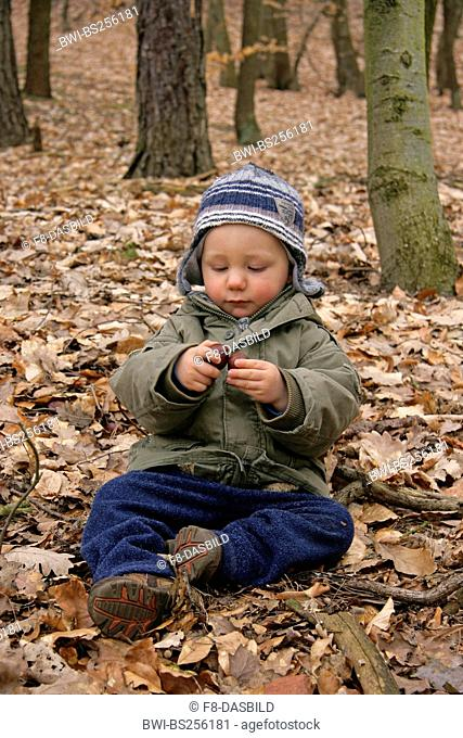 little boy sitting in forest and playing with chestnuts, Germany