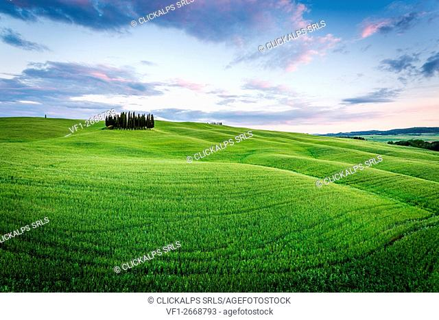 Tuscany, Val d'Orcia, Italy. Cypress trees in green meadow field with clouds gathering meadow field at sunset