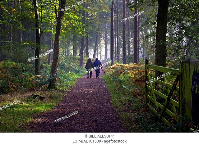 England, Leicestershire, Woodhouse Eaves. A couple walking a woodland path