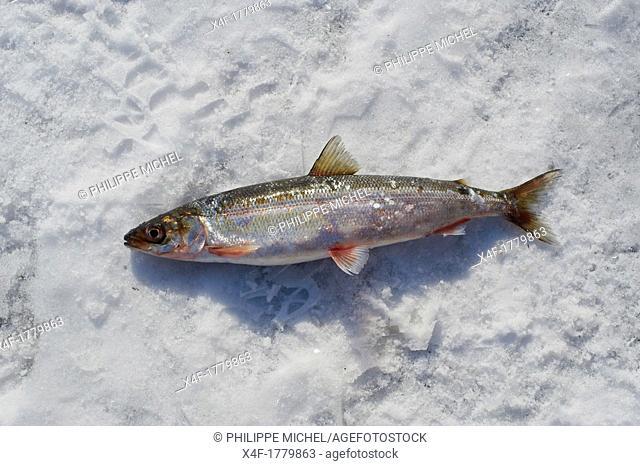 Russia, Siberia, Irkutsk oblast, Baikal lake, Maloe More little sea, frozen lake during winter, fishing on the ice